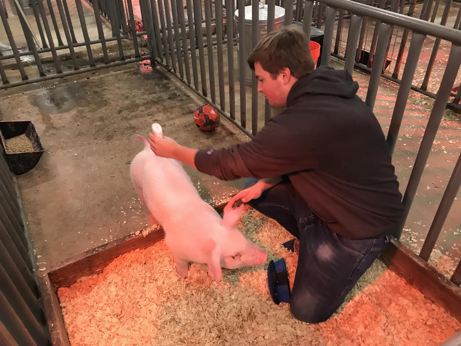 Brandon Herzog has gained his pig, Jolene's trust over the past two months and is making preparations for their next competition on February 8th.